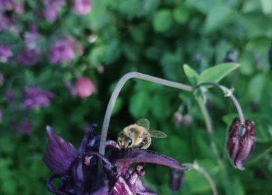 Избежать массовой гибели пчел!