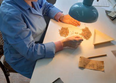 Качественный семенной материал – залог хорошего урожая